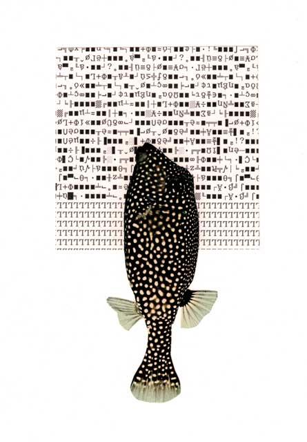 collage kodearrainak - bigara