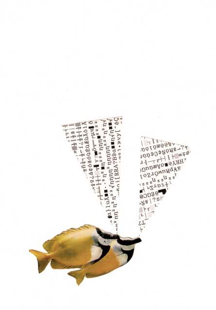 collage eta diseinua kodearrainak - bigara